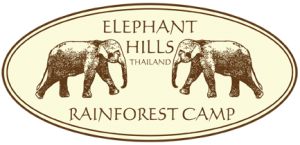 Elephant Hills Rainforest Camp