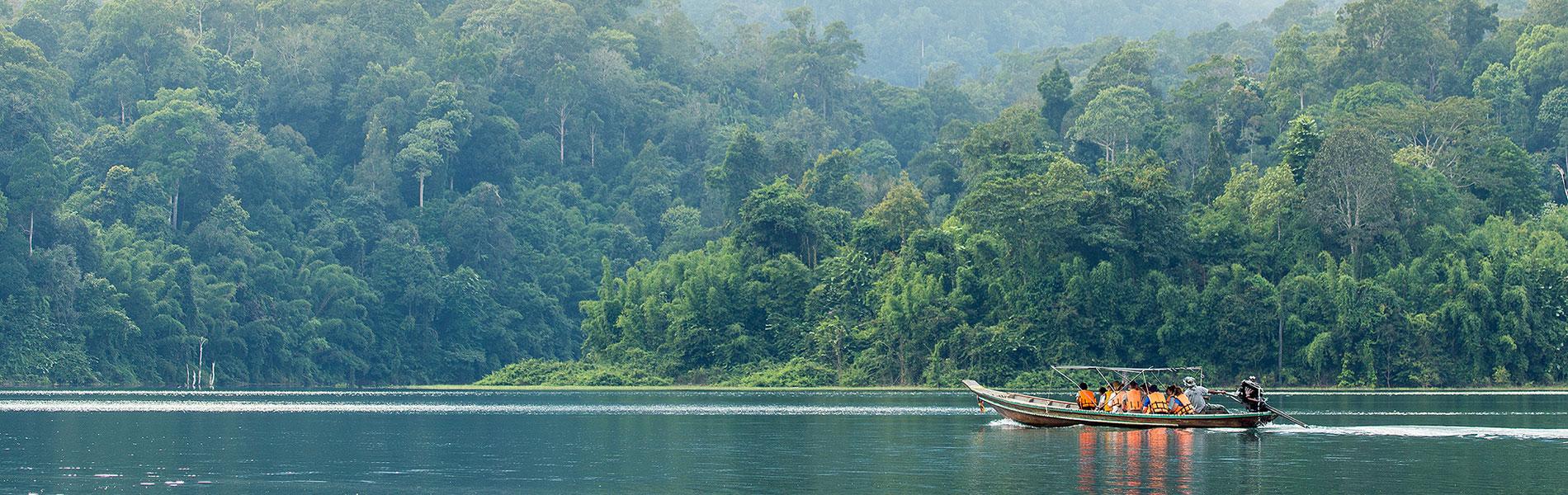 Rainforest Camp Atmosphere