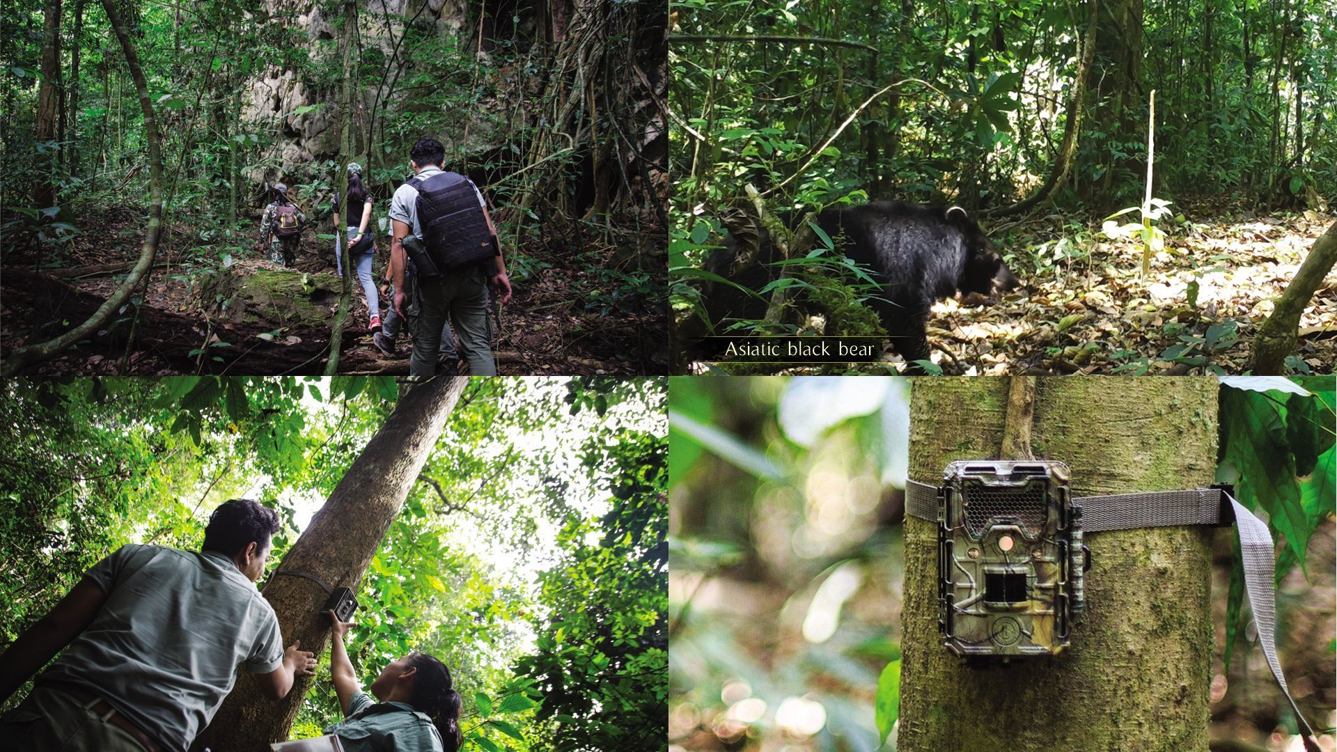 Elephant Hills Project team set and collect camera footage every other to figure out existing Wildlife at Khao Sok National Park.