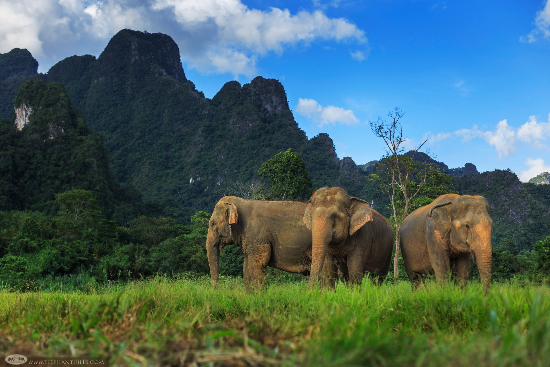 Elephants roam in chain-free ethical elephant park in Southern Thailand. Elephant Experience is included on Jungle Lake Safari tour with stay at Rainforest Camp